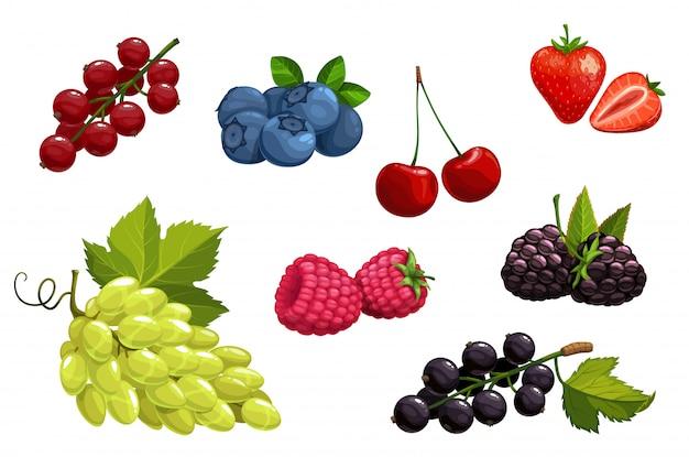 Cartoon berries  vegetarian nutrition set