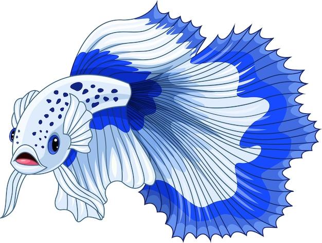 만화 파란색과 흰색 샴 싸우는 물고기