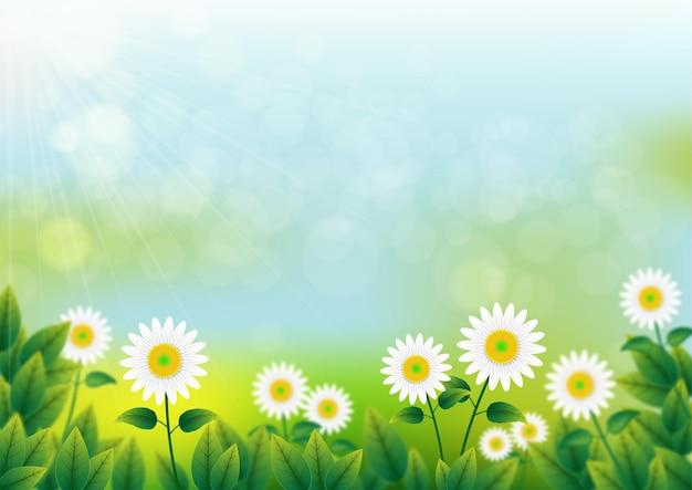 Мультяшный размытый весенний фон. цветок ромашка