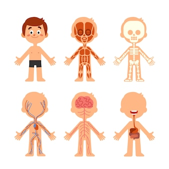 Cartoon boy body anatomy