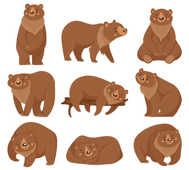 Cartoon brown bear. grizzly bears, wild nature forest predator animals and sitting bear   illustration