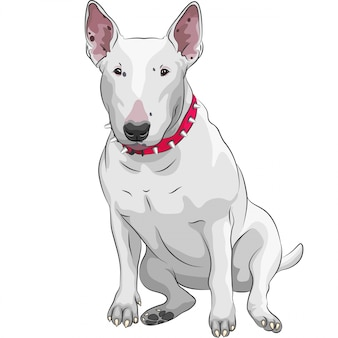Cartoon bull terrier dog breed sitting