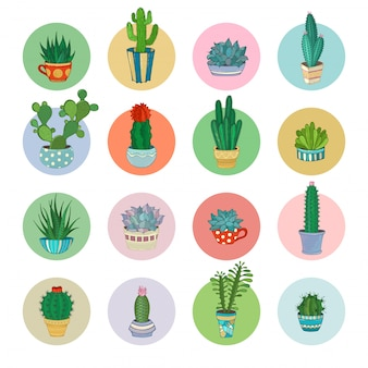 Cartoon cacti and succulent icons set.