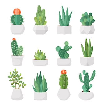 Cartoon cactus and succulents in pots  set