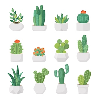 Cartoon cactus and succulents in pots vector set