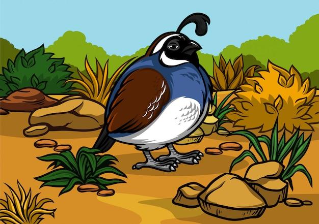 Cartoon california quail bird in the nature