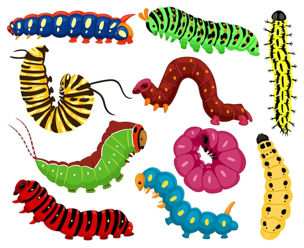 漫画の毛虫。かわいい夏の昆虫、春のカラフルな毛虫。