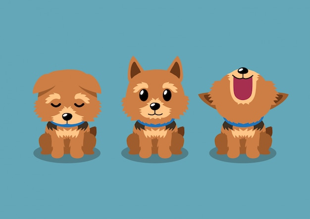 Premium Vector Cartoon Character Norwich Terrier Dog Poses