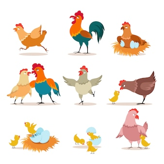 Cartoon chicken. chick with eggs, hen and rooster. happy christmas chicken, domestic birds and valentine pets  characters