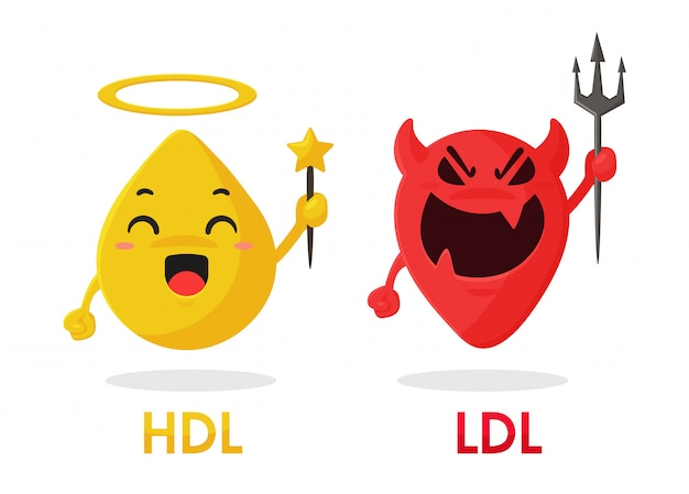 Cartoon cholesterol, hdl and ldl components are good fats and bad fats from food.