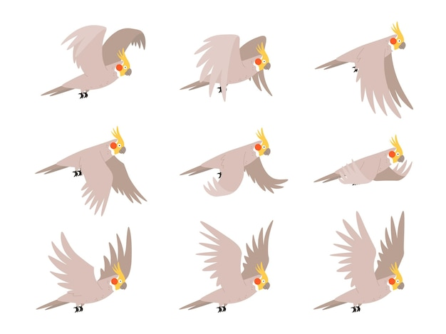 Cartoon cockatoo parrot fly animation frames sequence. animated sprites loop of tropical bird flying in sky. parrot wing vector motion cycle. exotic adorable fauna character flight