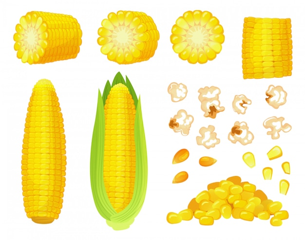 Мультфильм кукуруза. урожай золотой кукурузы, кукурузные зерна попкорна и сладкая кукуруза. початок кукурузы, набор вкусных овощей