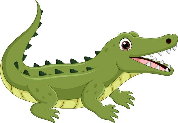 Мультяшный крокодил, изолированный на белом