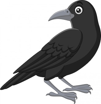 Cartoon crow isolated on white