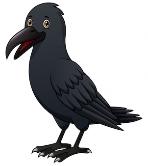 Cartoon crow isolated