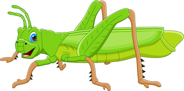 Cartoon cute grasshopper isolated on white background