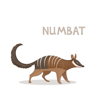 A cartoon cute numbat