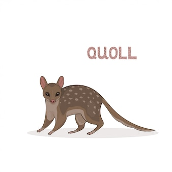 A cartoon cute quoll, isolated. animal.