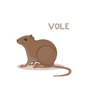 A cartoon cute vole, isolated on a white background.