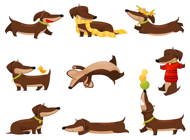 Cartoon dachshunds on white background.  illustration.