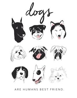 Cartoon dog breeds illustration