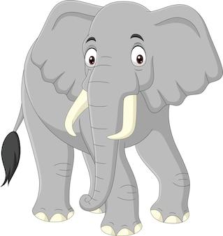 Cartoon elephant isolated on white