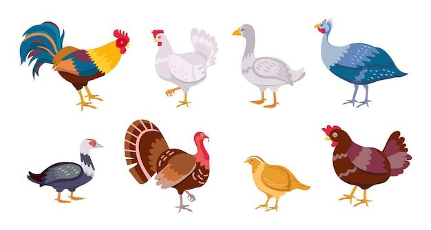 漫画の農場の鳥の鶏の鶏、オンドリ、アヒル、ガチョウ。家禽の家族。平らな国産産卵鳥、鶏、七面鳥、ウズラのベクターセットです。自然なエコ田舎の孤立したペットのイラスト
