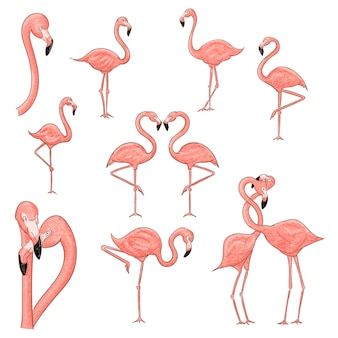 Cartoon flamingo set illustration isolated on white