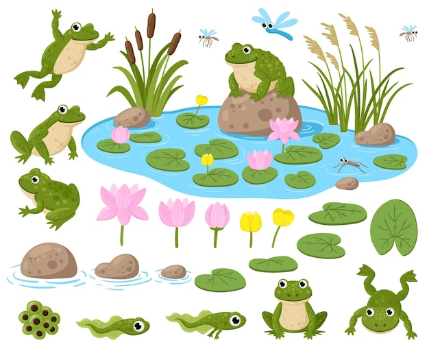 Cartoon frogs. cute amphibian mascots, frogspawn, tadpoles, green frogs, water lilies, summer pond and insects vector illustration set. frogs nature habitat. tadpole cute, baby frog and toad