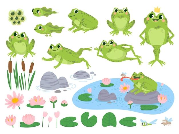 Мультяшные лягушки. зеленая милая лягушка, яичная масса, головастик и лягушка. водные растения кувшинка лист, жабы дикой природы набор векторных жизни. тростник и цветы. персонаж на пруду ловит насекомых