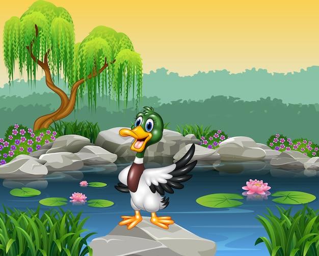 Cartoon funny duck presenting