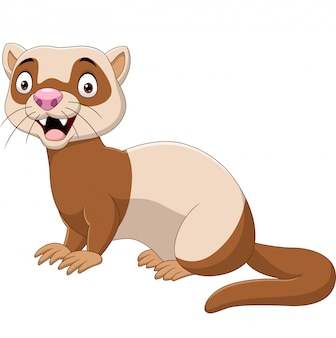 Cartoon funny ferret isolated on the white