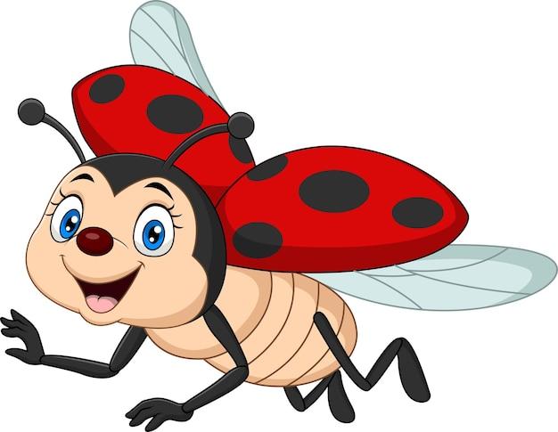 Cartoon funny ladybug on white