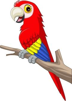 Cartoon funny macaw on tree branch