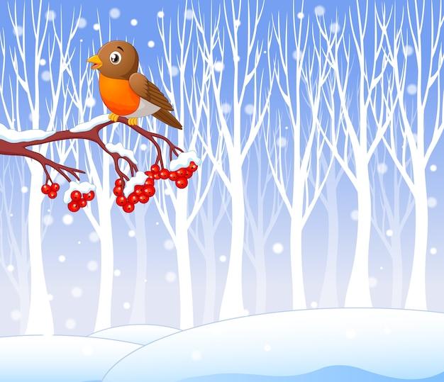 Cartoon funny robin bird on the berry tree