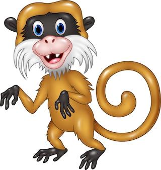 漫画面白いタマリン猿は、白い背景に