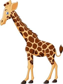 Cartoon giraffe isolated on white background