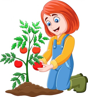 Cartoon girl harvesting tomatoes