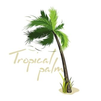 Cartoon green palm tree
