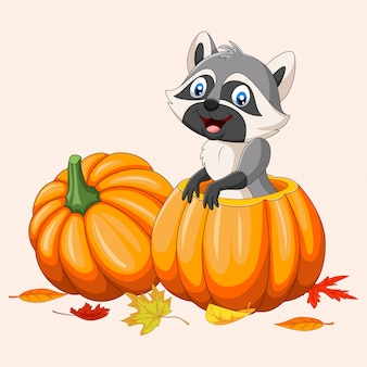 Cartoon happy raccoon in pumpkin basket