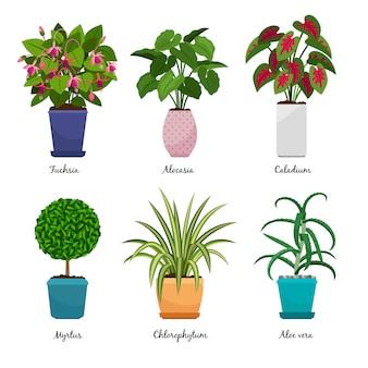Мультфильм комнатные растения, изолированные на белом