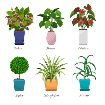 Cartoon houseplants isolated on white