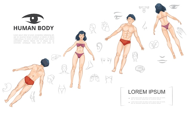 Cartoon human anatomy template with man and woman front and back view body parts internal organs
