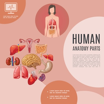 Cartoon human anatomy template with woman body lungs liver kidneys heart brain stomach intestine spleen uterus
