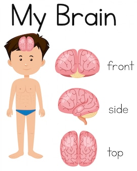 A cartoon of human brain