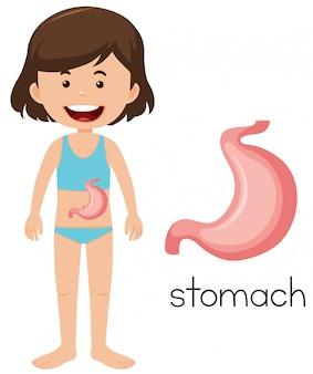 A cartoon of human stomach