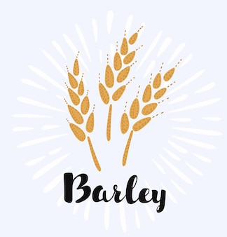 Cartoon illustration of ears of barley