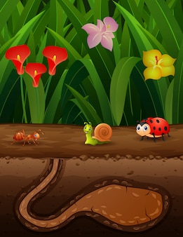 Cartoon illustration of insects in the ground