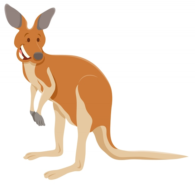 Cartoon illustration of kangaroo animal character