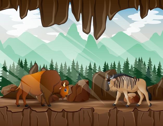 洞窟の中を歩くヌーとバイソンの漫画イラスト